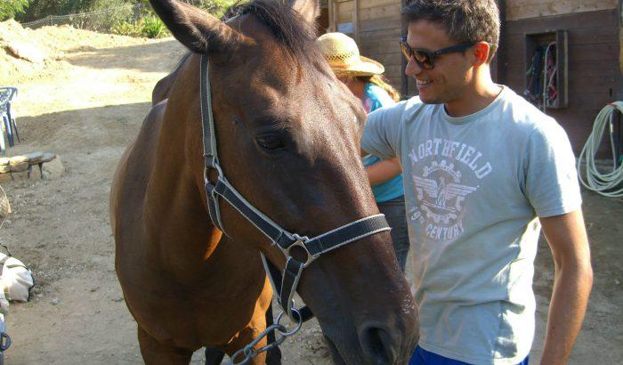 Katjasgoldenhorses